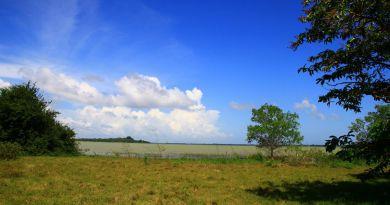 เกาะแพ ปากพะยูน